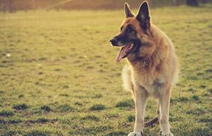 Get Your Dog to Pay Attention Off Leash: Be Unpredictable