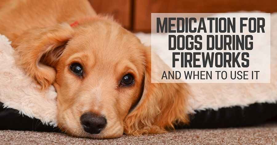 medication for dogs during fireworks and when to use it, Muscles
