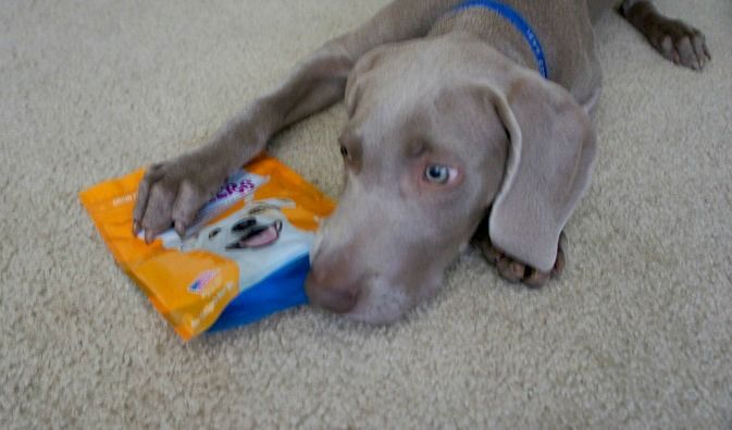 My puppy Remy with Droolers treats