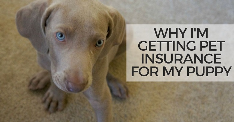 Dog Walking Insurance Pay Monthly