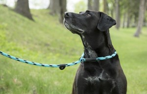 Slip Leads for Dogs – Is a Slip Lead a Good Choice for Your Dog?