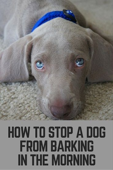 stop a dog from barking in the morning