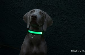 USB Rechargeable LED Dog Collars – Petabunga Review & Giveaway
