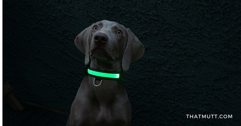 USB rechargeable LED dog collars - Remy