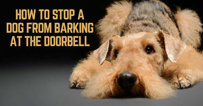 Teach your dog not to bark at the doorbell