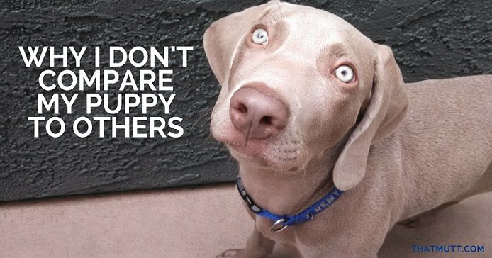 Why I don't compae my puppy to others