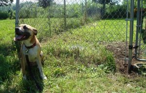 My Dog Is An Escape Artist—Outdoor Dog Run Fail