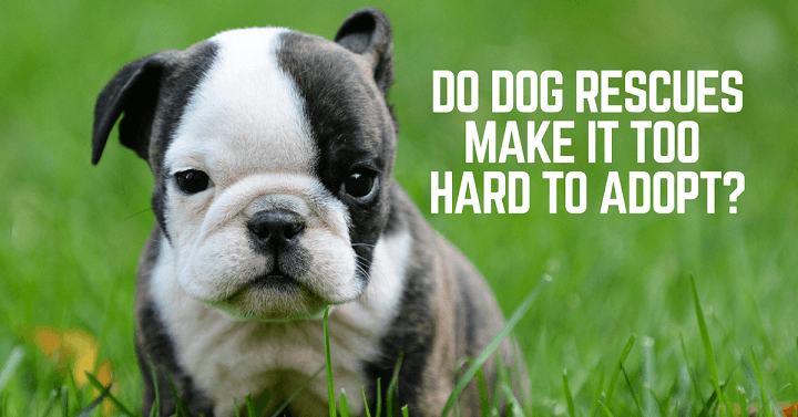Do dog rescues make it too difficult to adopt?