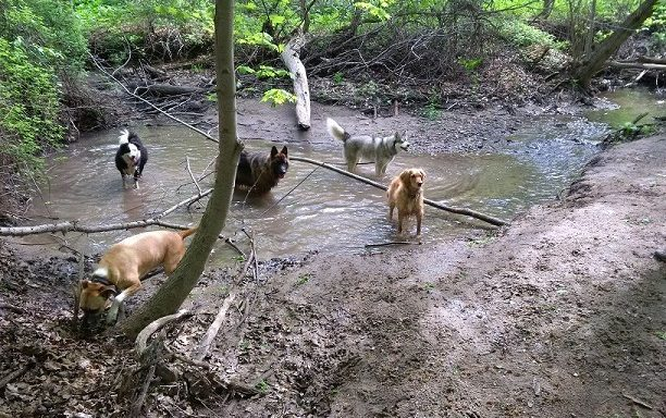Does Your Dog Like to Swim?