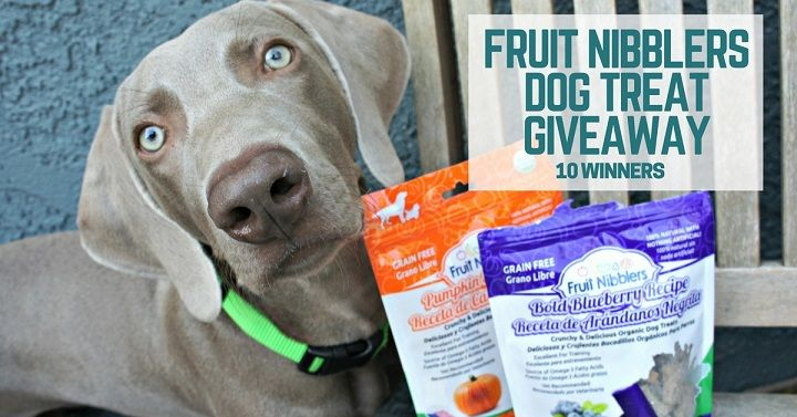 Fruit Nibblers dog treat giveaway