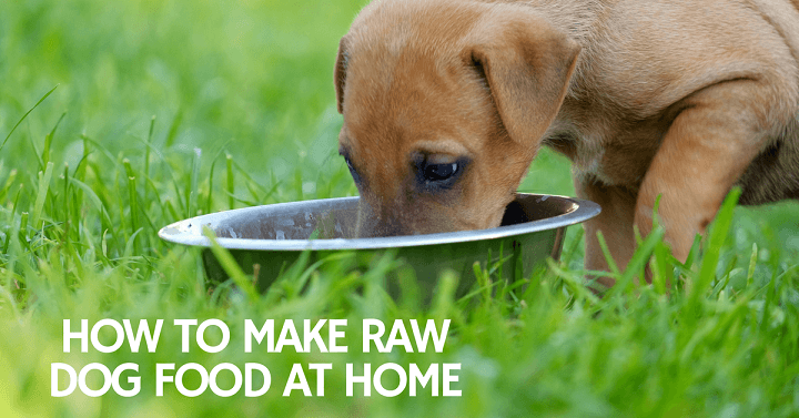 How to make raw dog food at home thatmutt a dog blog how to make raw dog food compressor solutioingenieria Images