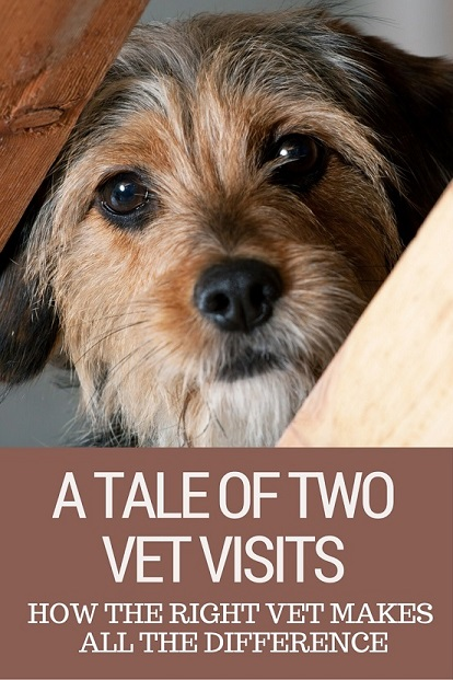 How the right vet can make all the difference