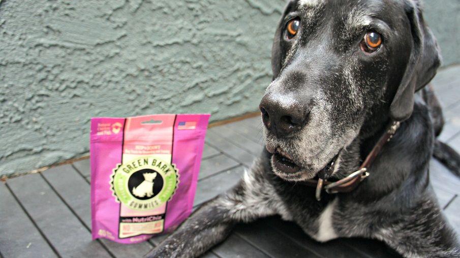 Ace with Green Bark Gummies dog treats