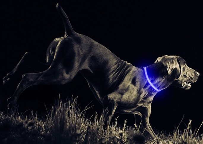 Blue LED USB rechargeable dog collar from Petabunga
