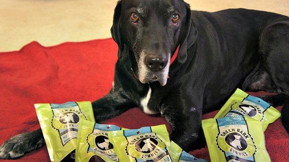 Ace with Green Bark Gummies treats
