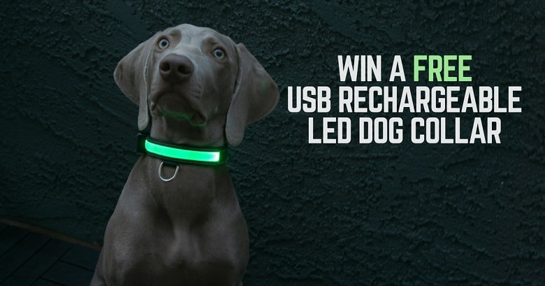 led-collar-blog-news-fb