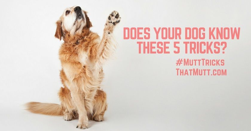 Does your dog know these tricks?