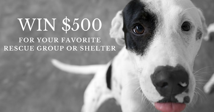 Win a $500 donation for your favorite rescue group