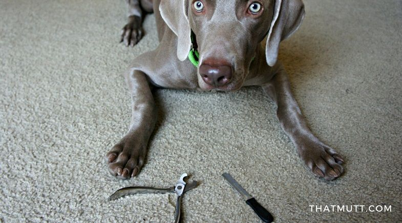 MIU PET dog nail clipper review