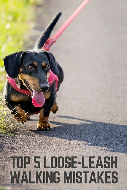 loose-leash-1