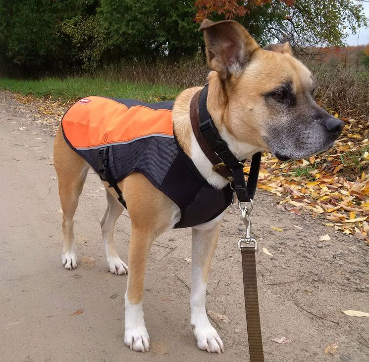 EzyDog Element Jacket review