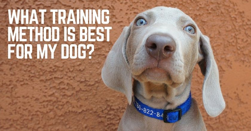 What dog training style is best for my dog?