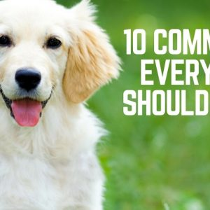 10 commands every dog should know