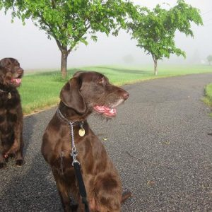A Typical Day for a Dog Walker