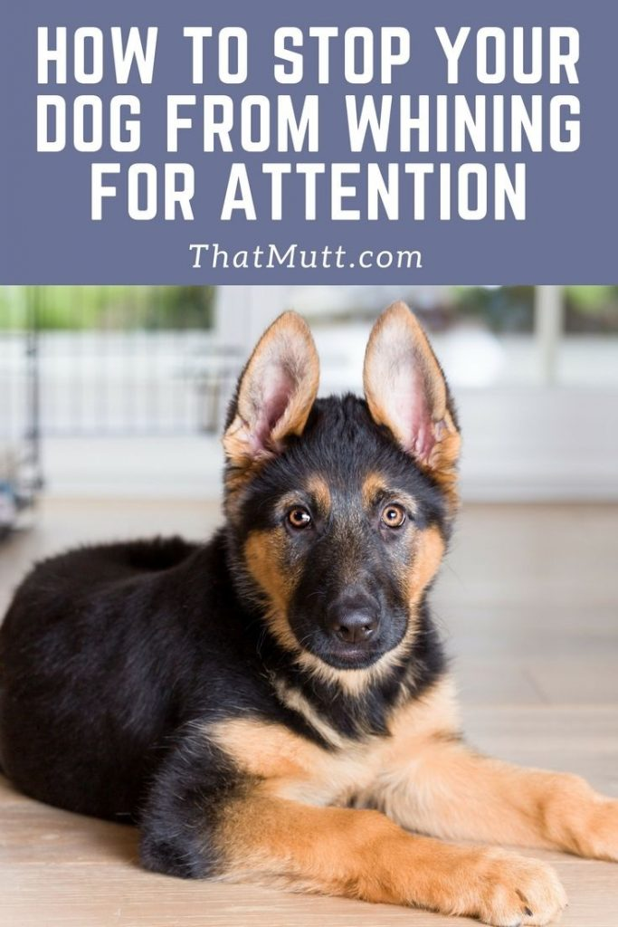 How To Stop Your Dogs Whining Now Thatmuttcom A Dog Blog