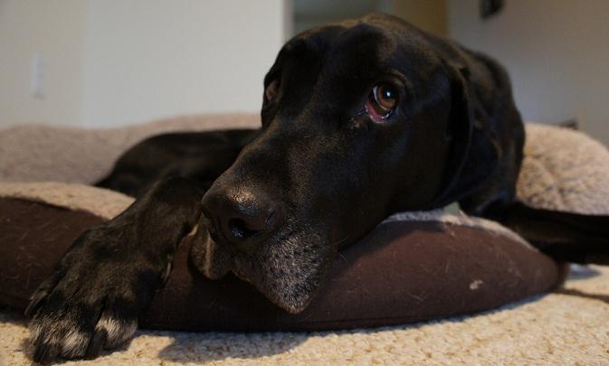 My dog Ace - Is dog daycare a good idea?