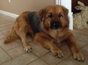 Dog Thundershirt reviews