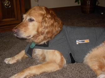 Thundershirt reviews