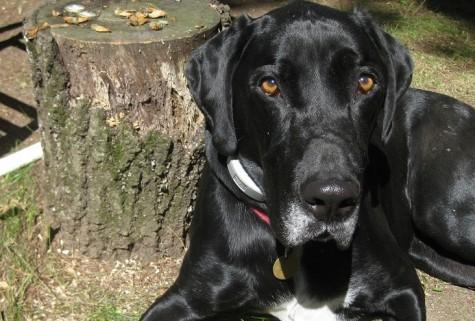 How To Get A Dog From Craigslist Thatmuttcom A Dog Blog