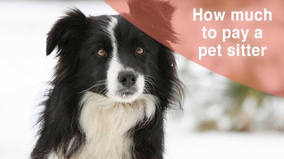 2019 Overnight Pet Sitting Rates Thatmutt Com