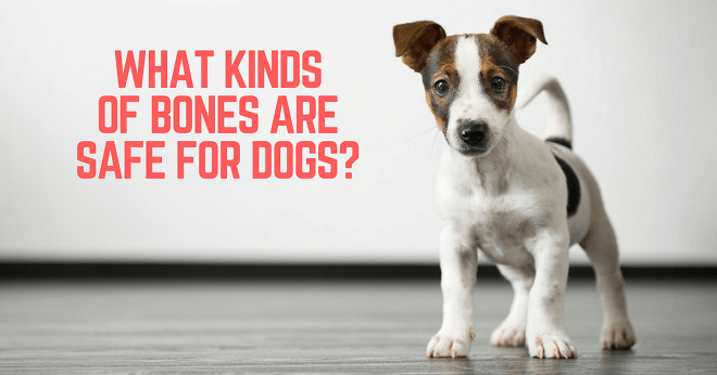 Which raw bones are safe for dog?