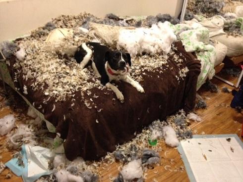 「犬 噛む 家具」の画像検索結果