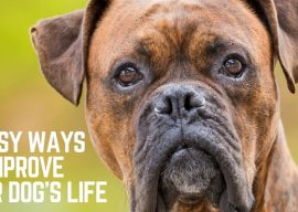 5 ways to improve your dog's life