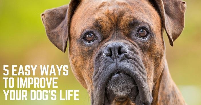 5 ways to improve your dog's life