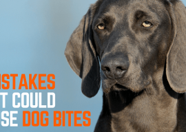 5 mistakes I've made that resulted in dog bites