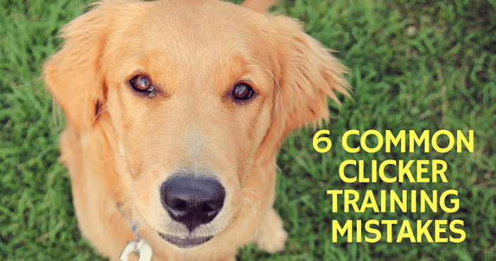 Common clicker training mistakes