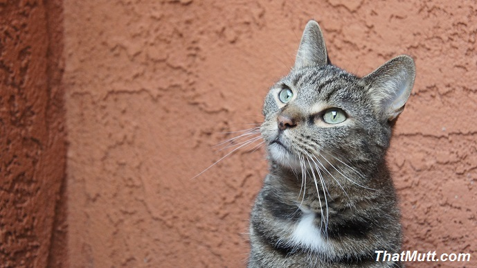 Best Diet for a Cat With Kidney Disease
