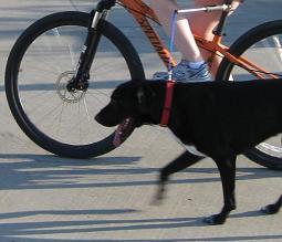 hands-free-bike-leash