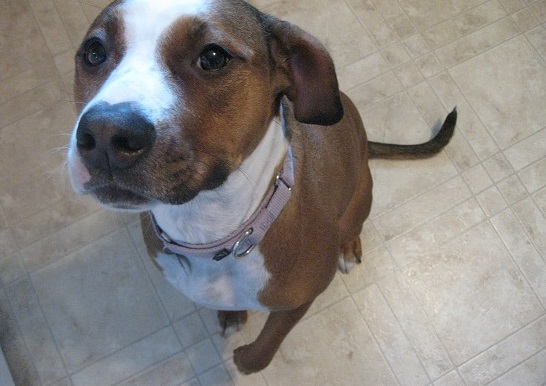 Penny - is dog daycare a good idea?