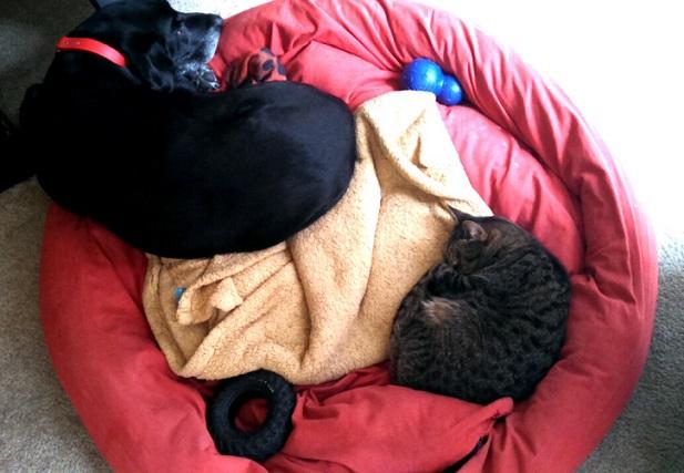 Dog Resource Guarding Human Bed