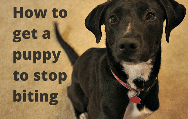 🐶 How to Stop a Puppy From Biting