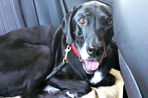 Dog travel anxiety