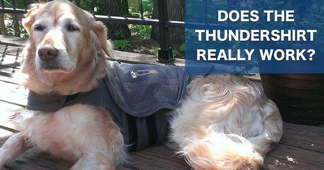 Does the Thundershirt really work