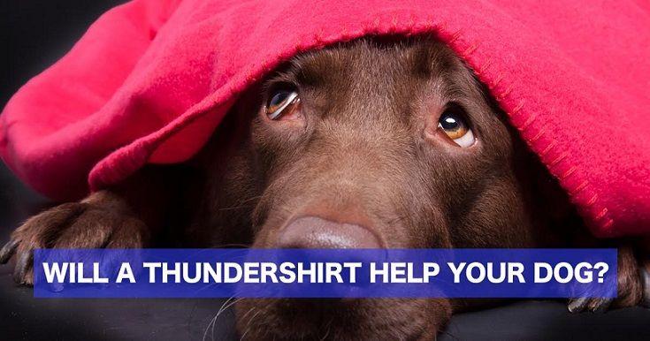 Does your dog need a thundershirt