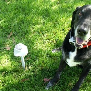 Is A Wireless, Electronic Fence Right For Your Dog? #Giveaway