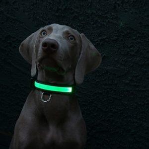 Baxter S Dog Food Feeding Guide